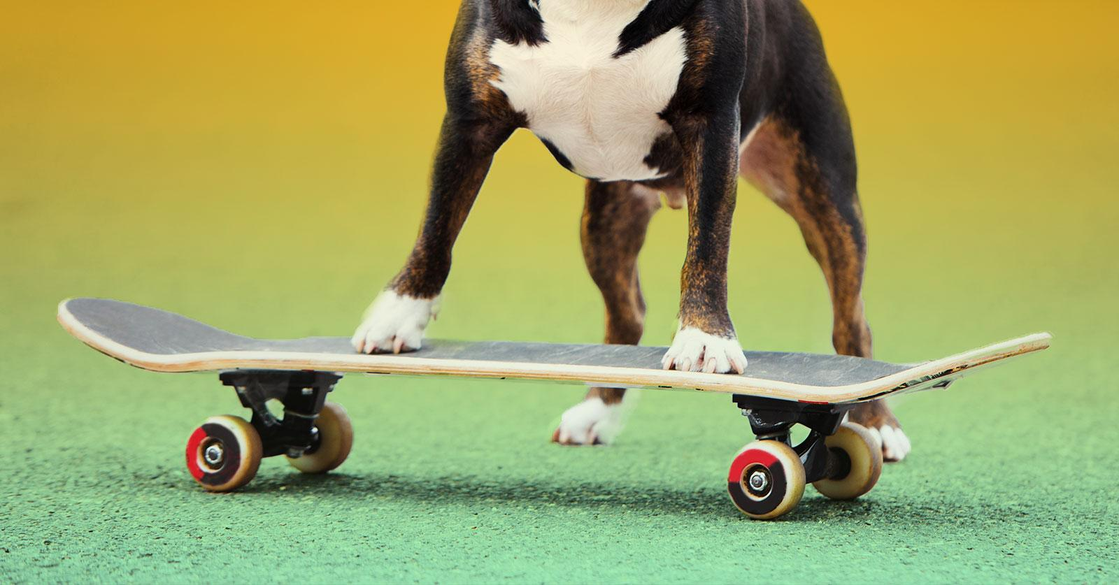 frenchieskateboard-1492614787979.jpg