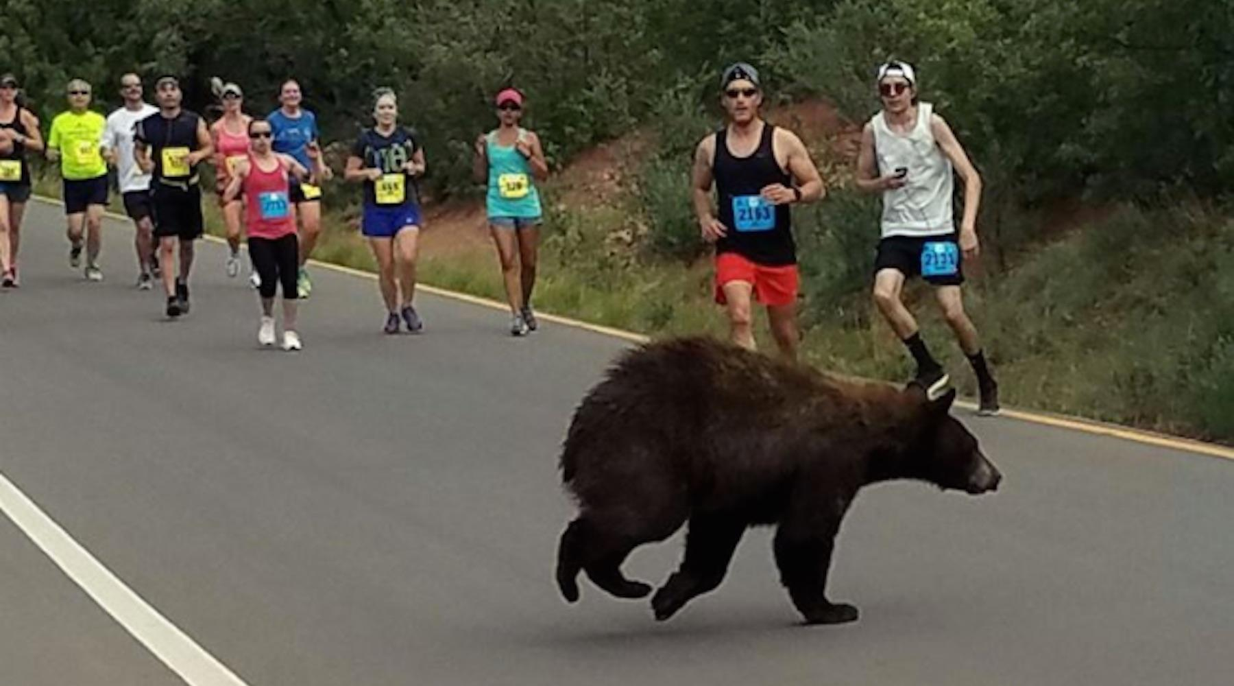 bear-1497291070521.jpg