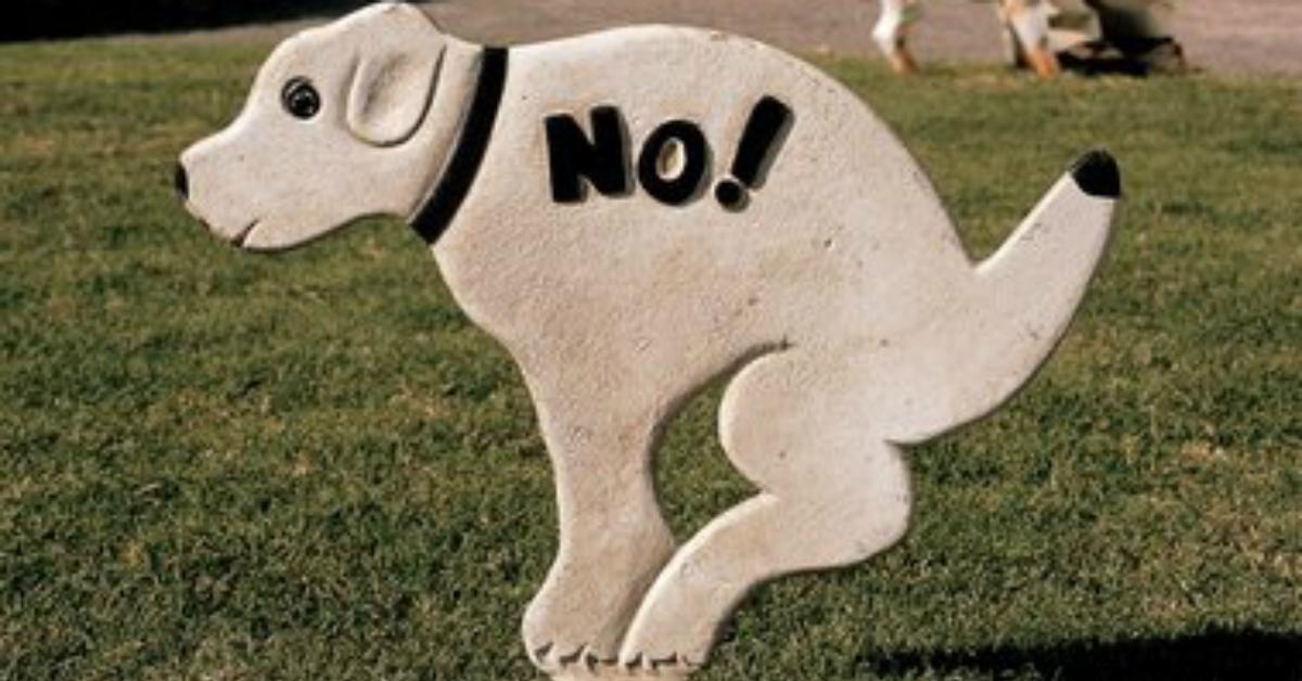 poopingdog-1540494821038-1540494822900.jpg