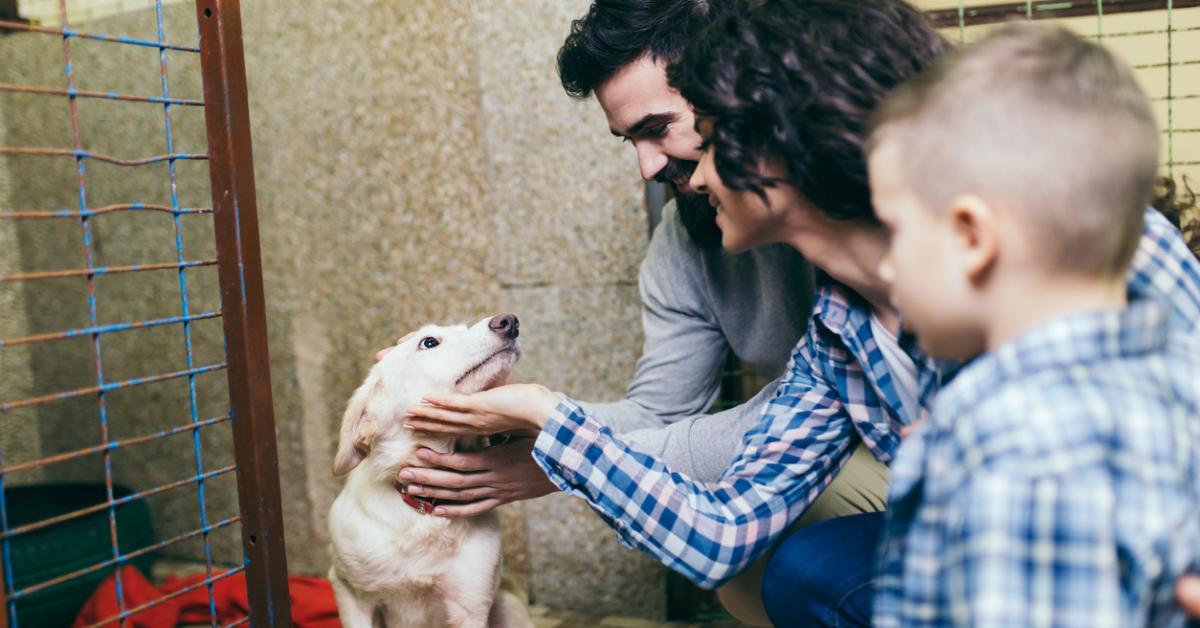 shelterdog-1534187417189-1534187419597.jpg
