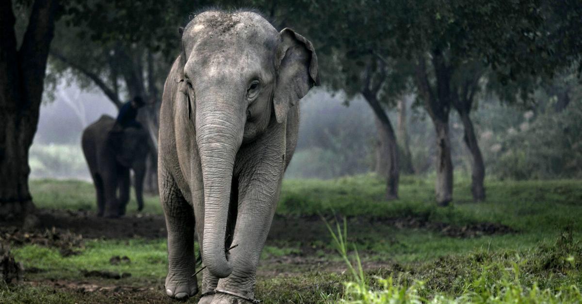 elephant-1534953898726-1534953900788.jpg