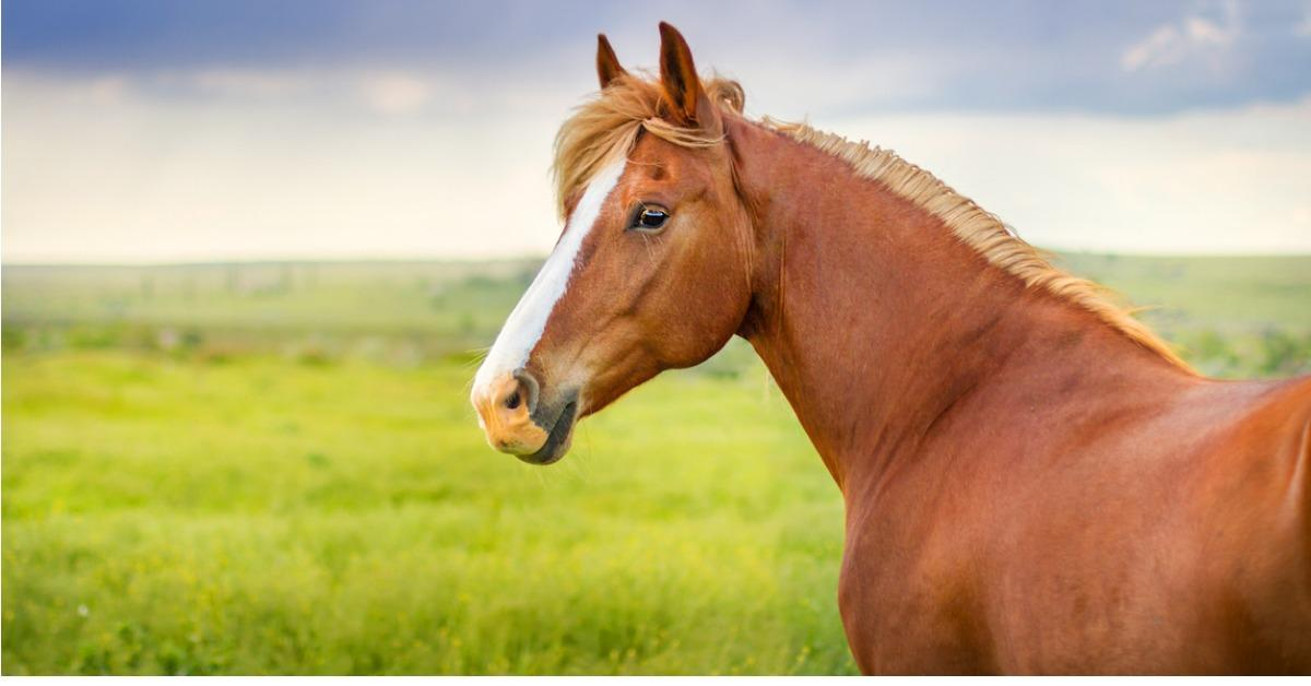 beautiful-horse-in-motion-picture-id843612074-1539013582984-1539013587338.jpg