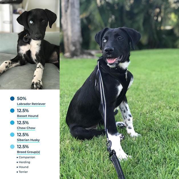 dog-dna-tests-4-1535556071639-1535556073703.jpg