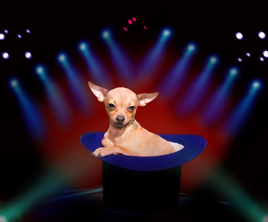 13magiciandog-1539984284346-1539985138078.jpg