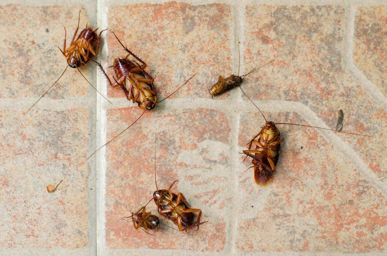 cockroach-1539378928838-1539378931317.jpg