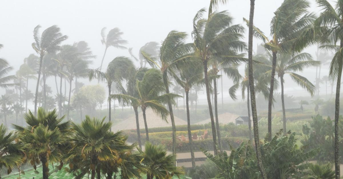 palm-trees-blowing-in-the-wind-and-rain-as-a-hurricane-approaches-a-picture-id1034439116-1542298332772-1542298334806.jpg