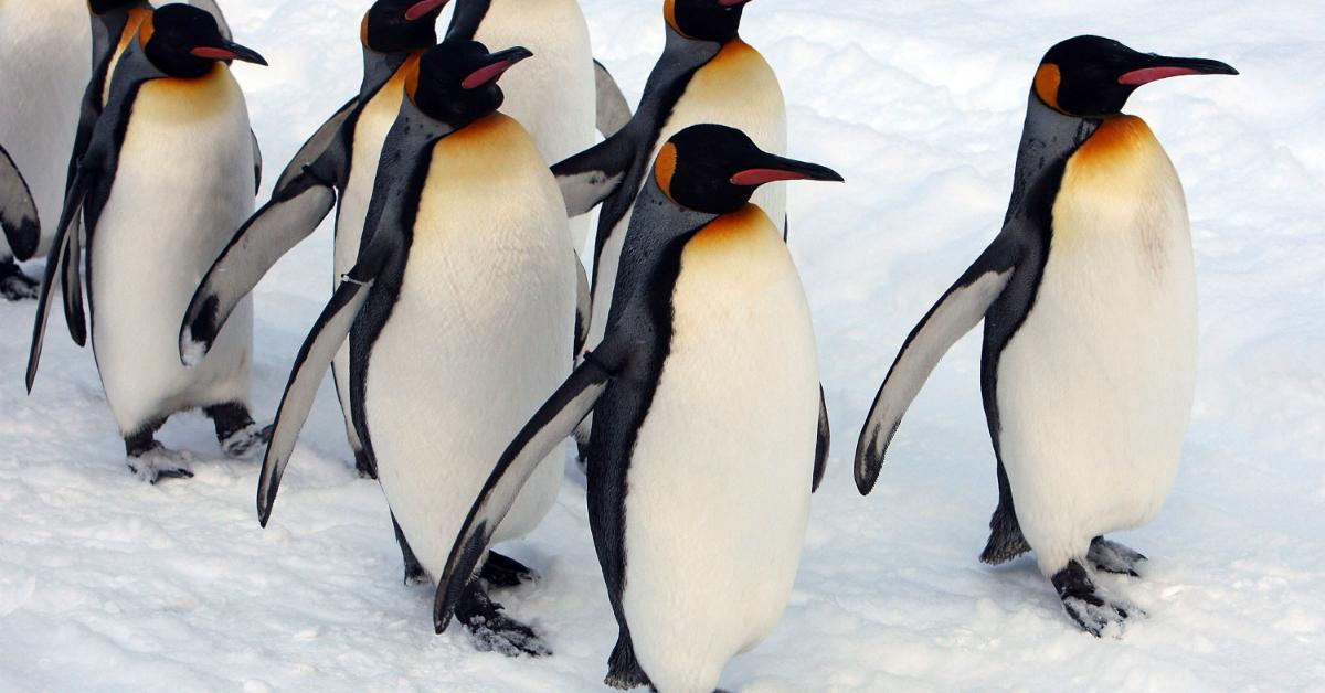 penguins-1534951872938-1534951875214.jpg
