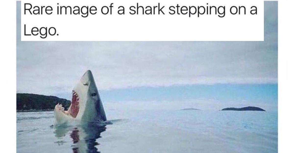 sharkweekmeme9-1532528167088-1532528168973.jpg