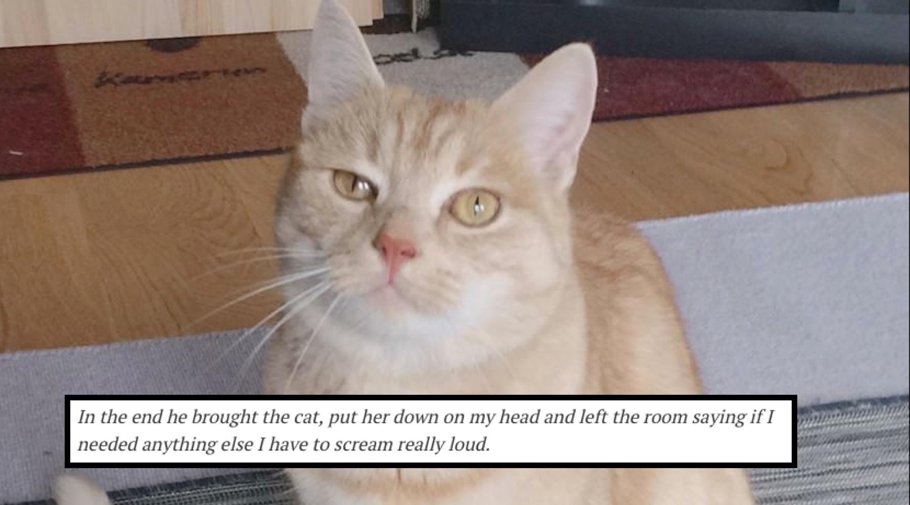catdepression-1515444093929.jpg