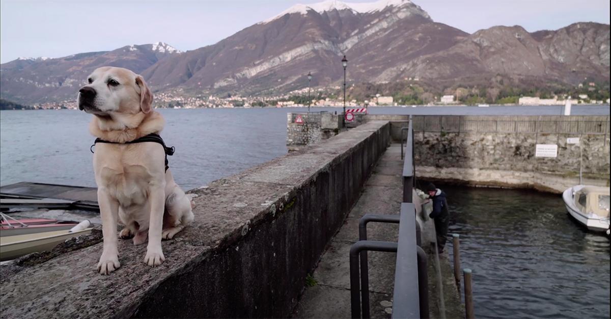 dogs-documentary-netflix-1copy-1540912614636-1540912616535.jpg