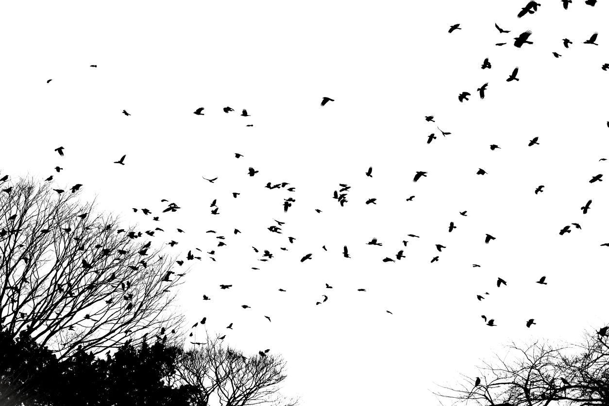 thebirds-1540320988028-1540320989803.jpg