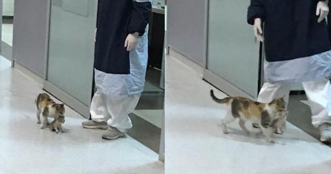 featured-cat-hospital-1588345801661.jpg