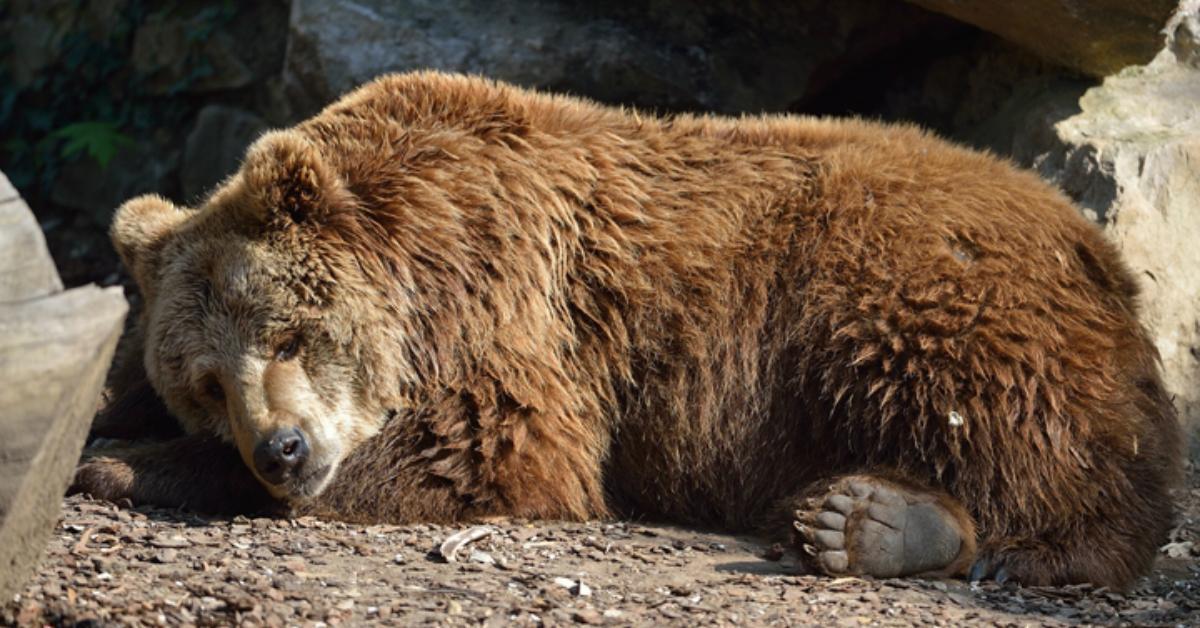 cover-bear-1491842128827.jpg