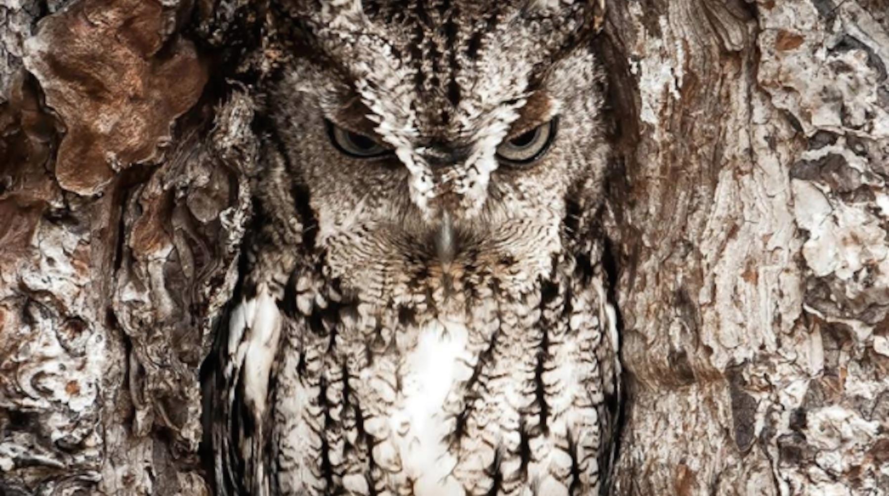 owl-1506296153436-1506296158888.jpg