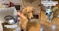 pretend to put your dog on a diet challenge