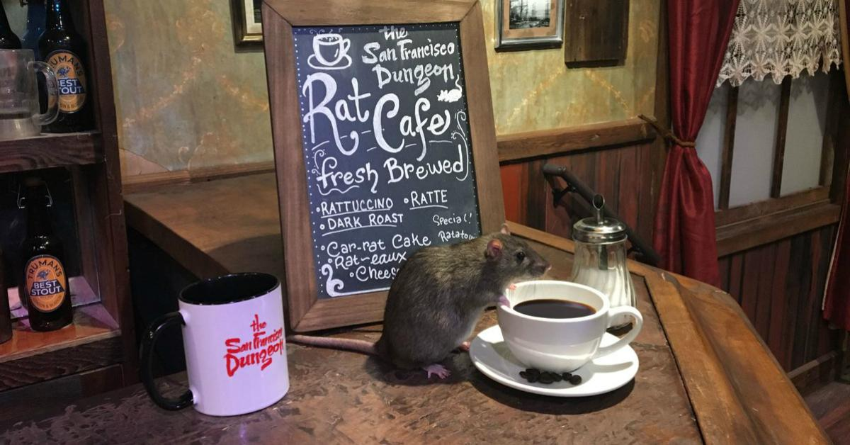 cover-rat-cafe-1495460267528.jpg