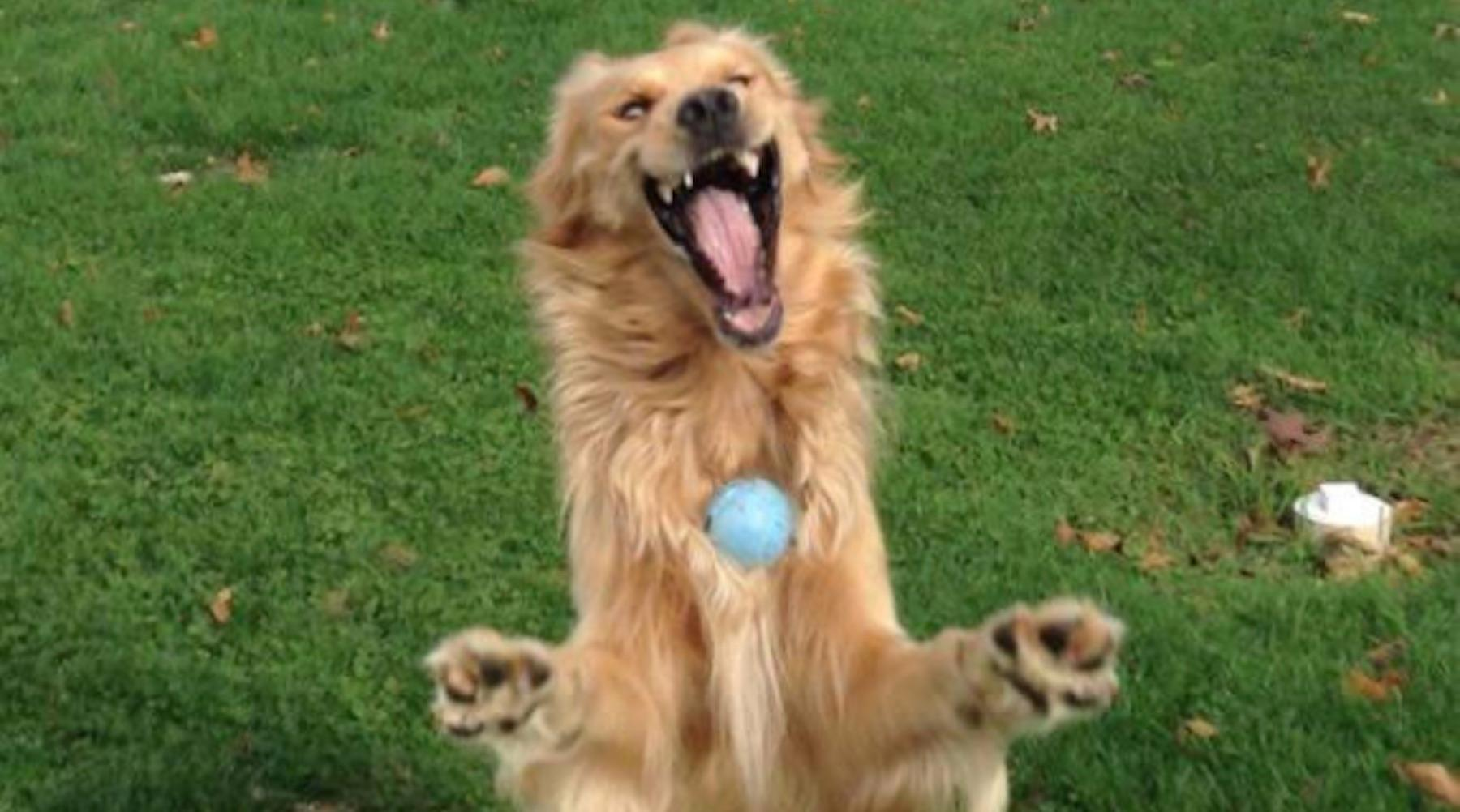 dog-1494442969494.jpg