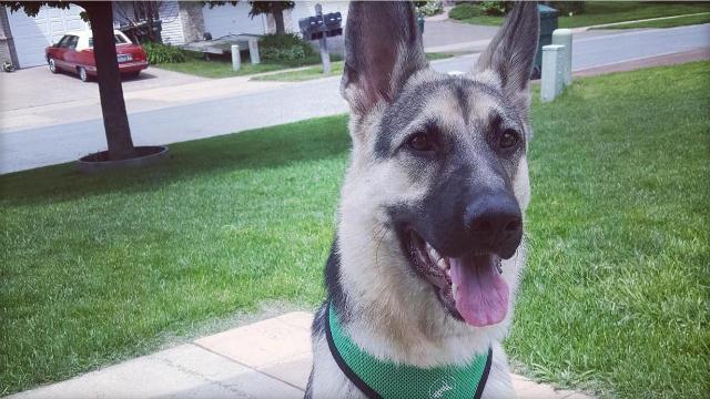 dog1-1495974163511.jpg