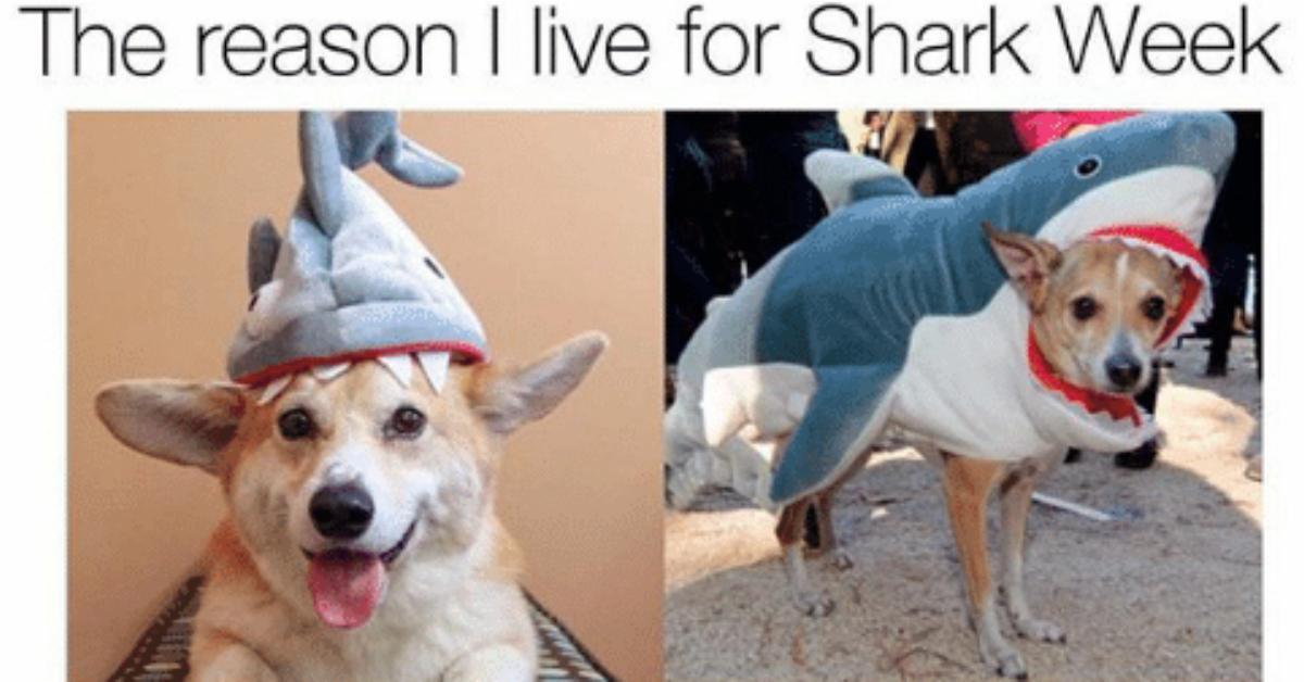 sharkweekmeme5-1532526678463-1532526680773.jpg