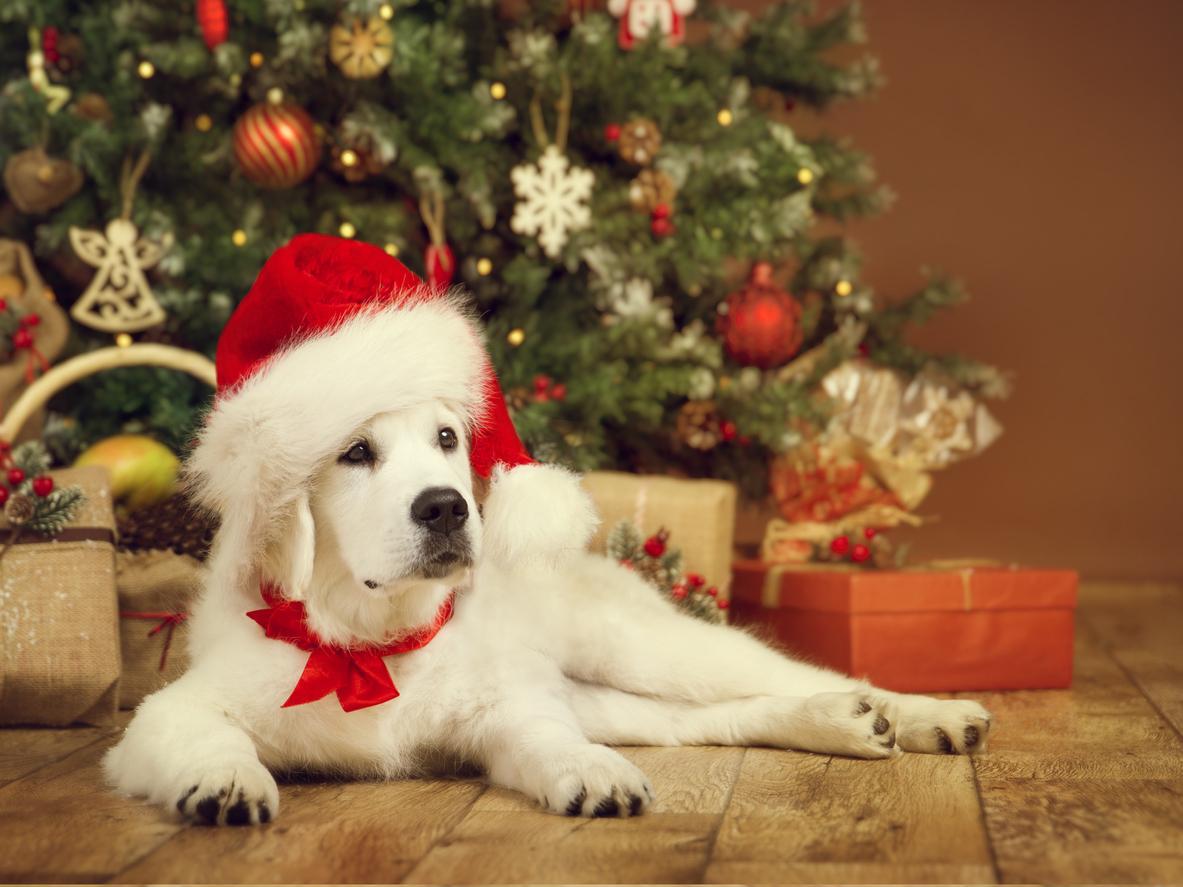 dog-christmas-1542657905854-1542657908203.jpg