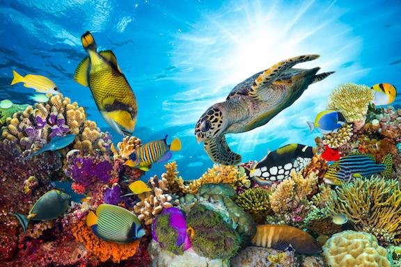 great-barrier-reef-1542212106204-1542212108004.jpg