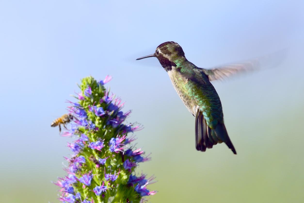 birdsbees-1539107824820-1539107826797.jpg