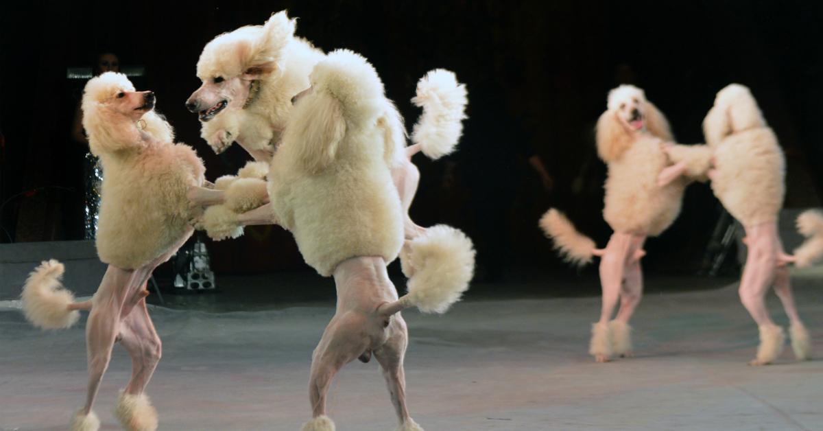 dancingdog-1534950655832-1534950657891.jpg