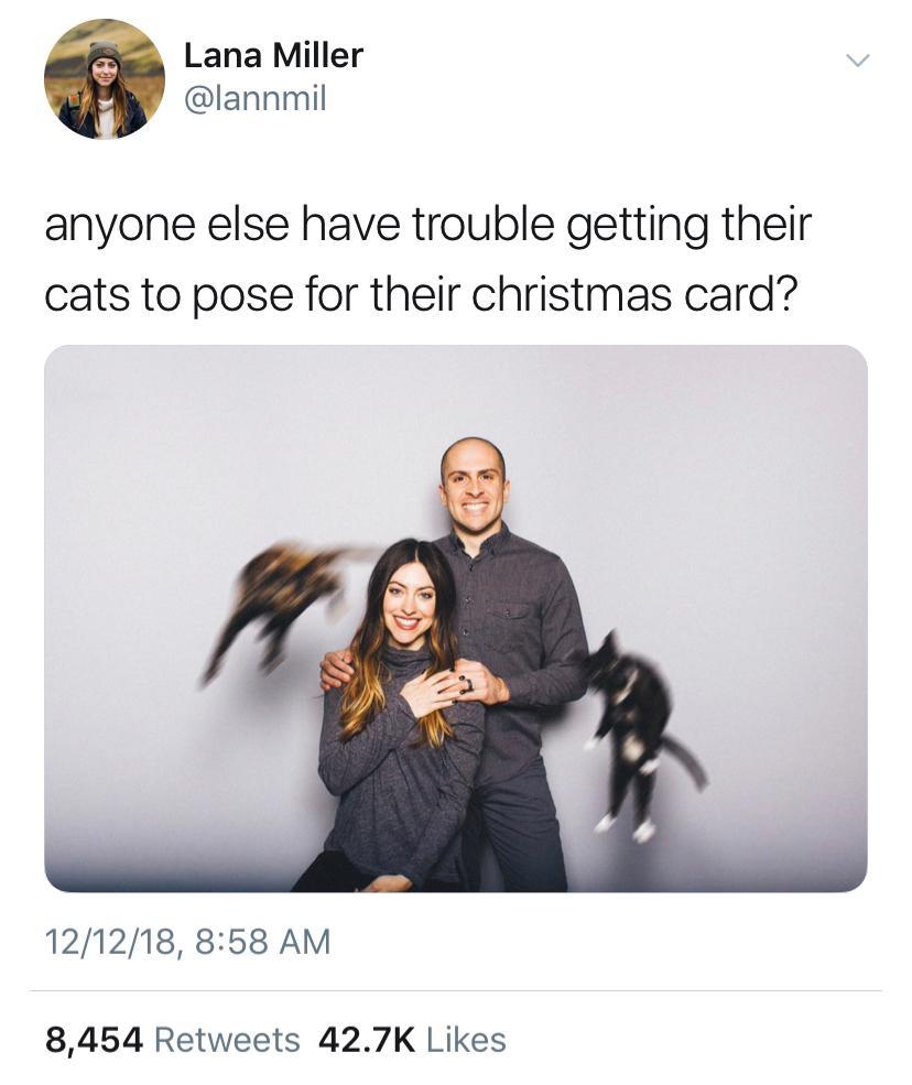 cat-christmas-disaster-1544824159259.jpg
