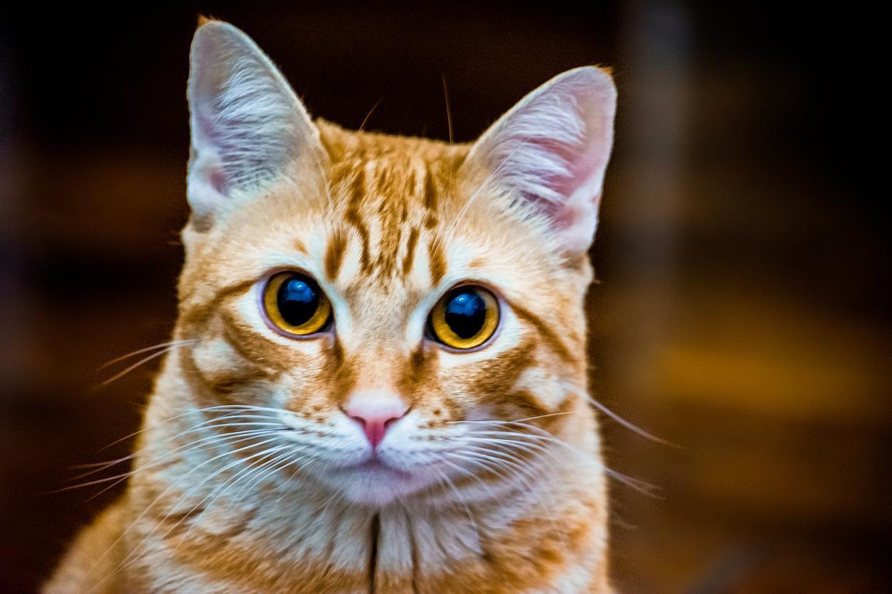 cat-1572890830386.jpg