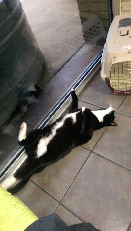 cat-vet-10-1545666825349.jpg
