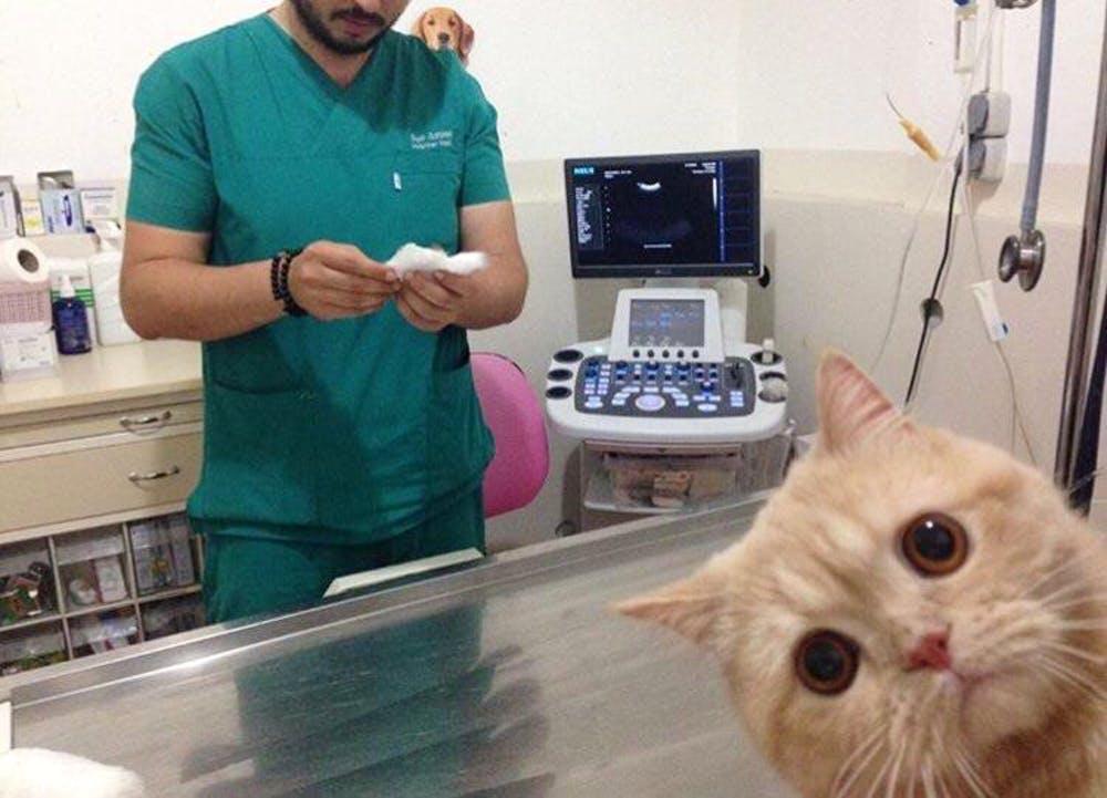 anti-vaxx-pets-2-1559314238542.jpg