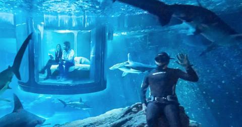 shark-aquarium-1571783167944.jpg