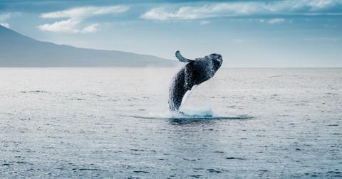 5-whale-1557762931960.jpg