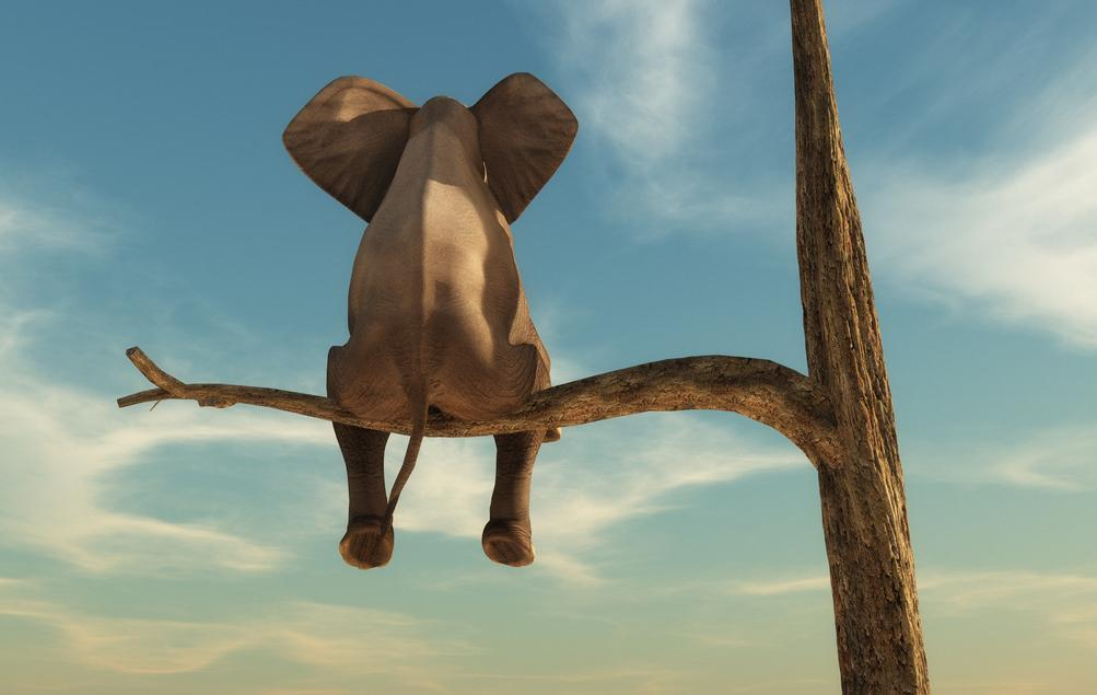 elephant-1541093411826-1541093414107.jpg