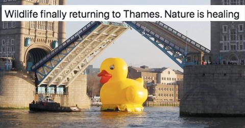 featured-nature-jokes-1585847206880.jpg