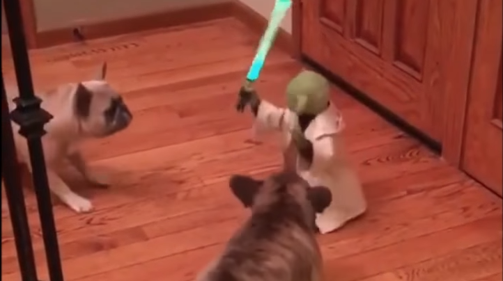 yoda-dog-toy-1543854672155.PNG