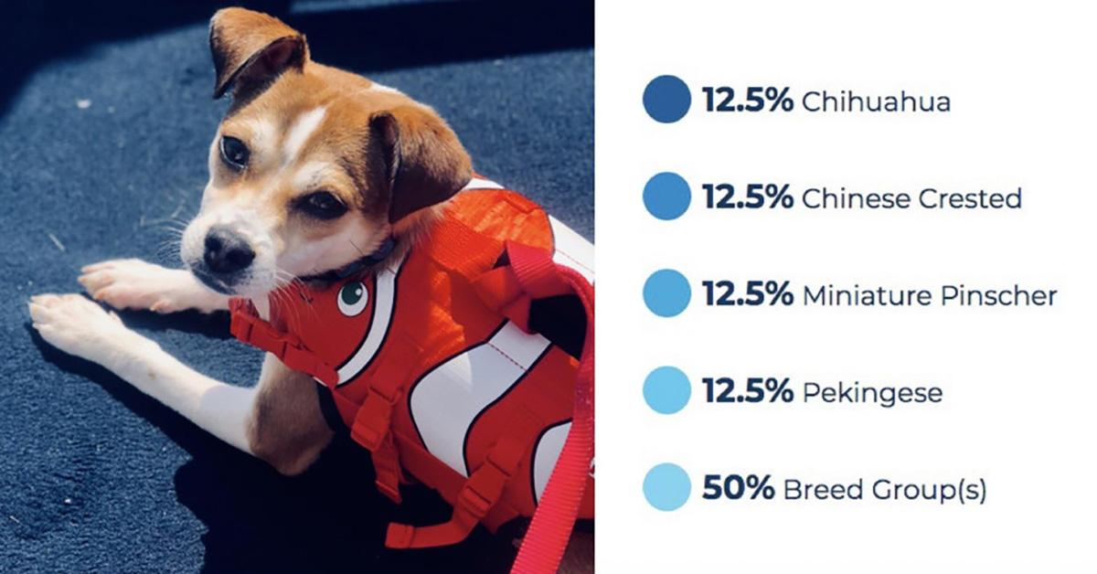 dog-dna-tests-3-1535555952640-1535555954475.jpg