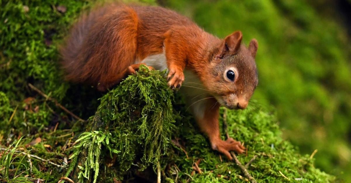 squirrel-1539263872074-1539263875919.jpg