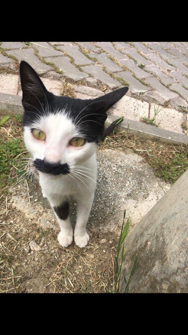 hitler-cat-1560199329538.jpg
