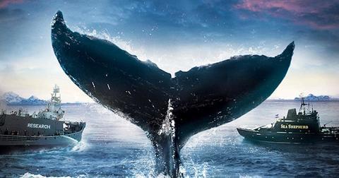whale-wars-cover-1575650103240.jpg