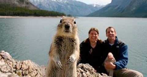 featured-animal-photobomb-1559577265833.jpg