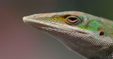 tiny-creatures-netflix-animal-abuse-1-1597085205217.jpg