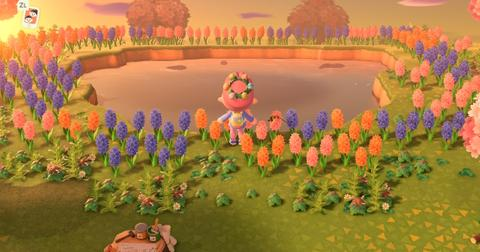 How To Cross Pollinate In Animal Crossing To Make More Colors