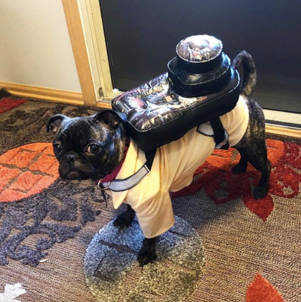 12-dog-costumes-1568997869096.jpg