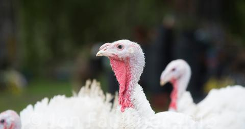is-turkey-bad-for-you-free-range-1574708426792.jpg