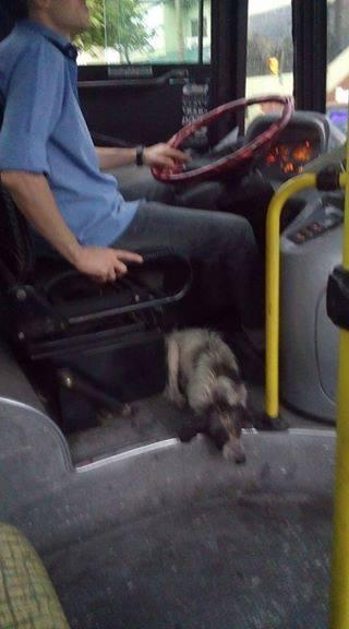 doggo-1-1486136372878.jpg