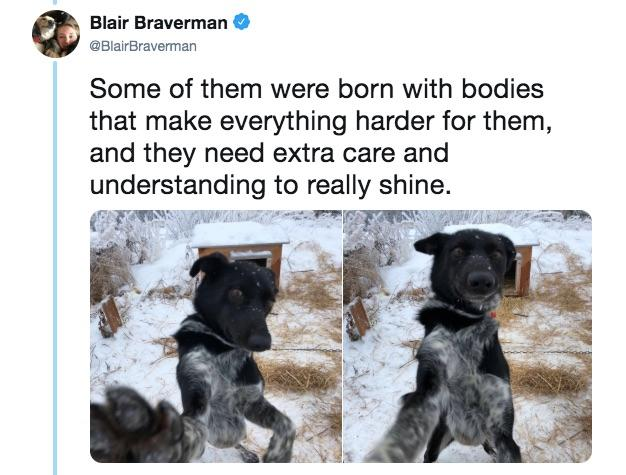 13-sled-dogs-1563217909529.jpg