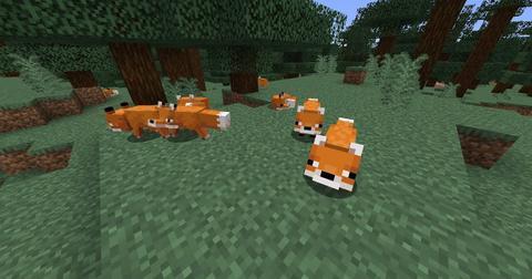 minecraft-tame-a-fox-1577990723006.jpg