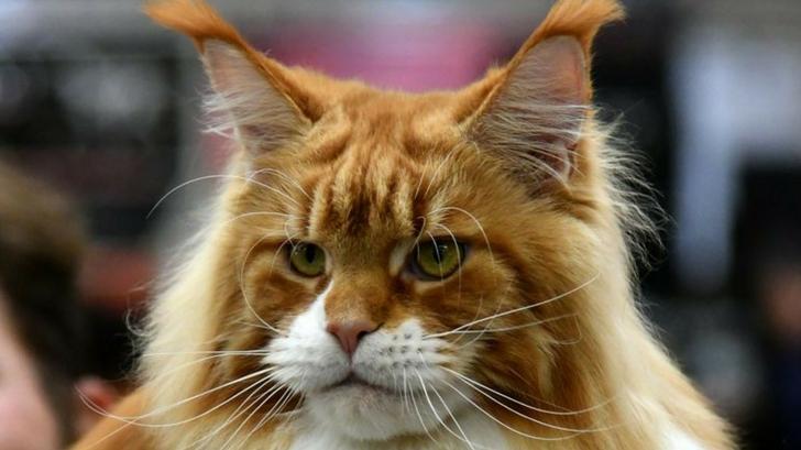 Cat-1510529131724-1510529134628.jpg