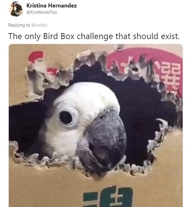 birdbox-challenge-memes-4-1546533632473.jpg